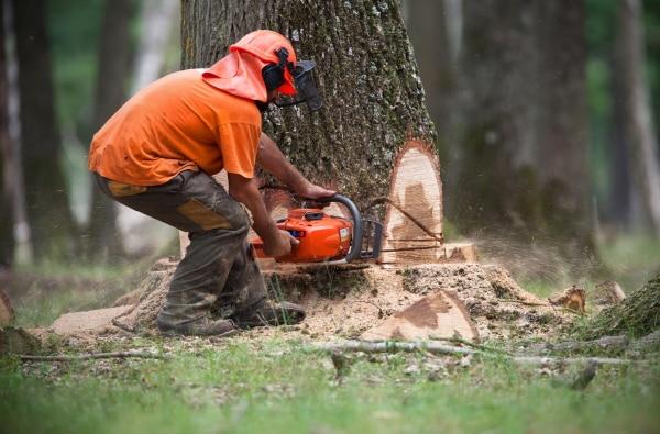 Coût d'un abattage d'arbres