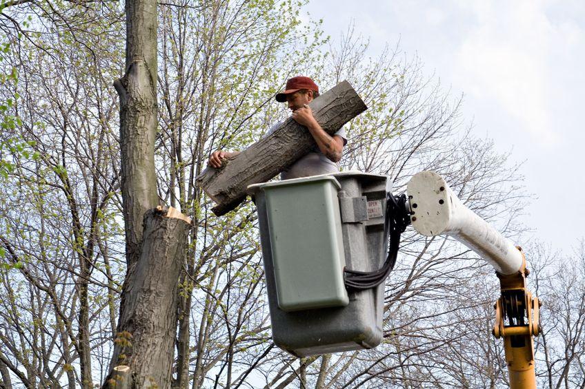 prix d 39 abattage d 39 un arbre tous les tarifs et devis abattage. Black Bedroom Furniture Sets. Home Design Ideas
