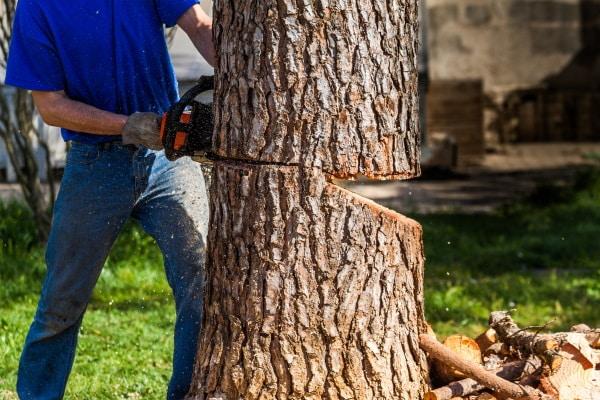 Prix d'un abattage d'arbres