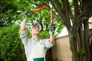 Jardinier réalisant élagage arbre