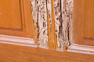 Comment savoir si on a des termites
