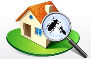 Besoin traitement termites