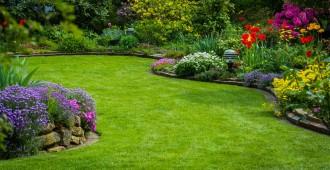 semer et faire pousser du gazon