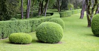 arbustes haie de jardin