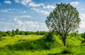 Calculer le prix d 39 un terrain non constructible for Prix terrains constructibles