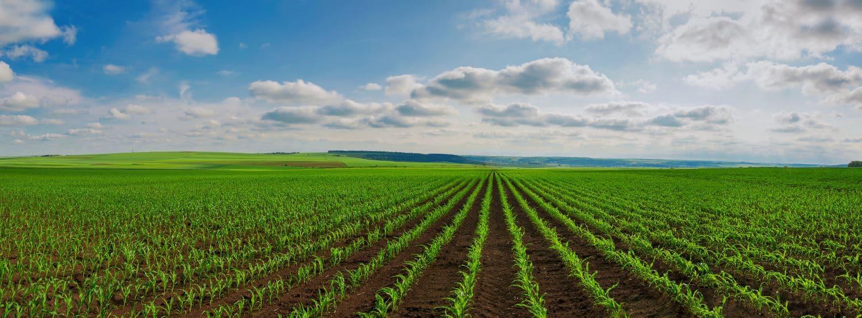 Coût terrain agricole