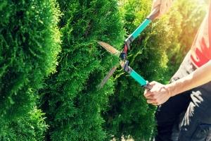 Le coût d'un entretien de jardin