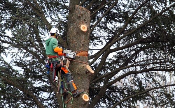 Le coût d'élagage d'un arbre