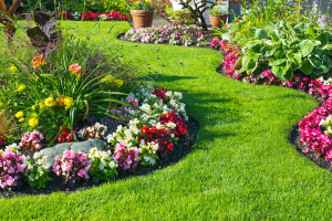 Amenagement du jardin
