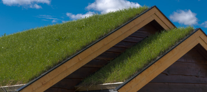 Le point sur la toiture végétalisée