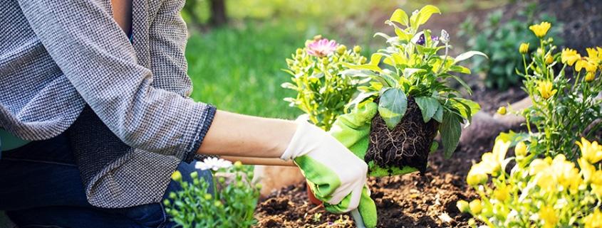 Les plantes pour une terrasse lumineuse