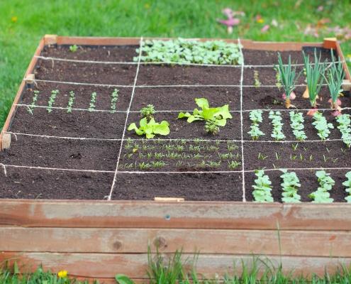 Jardin potager : comment le réaliser ?