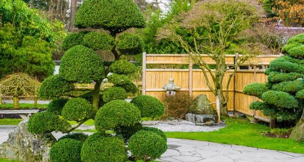 Comment choisir l'arbre de son jardin ?